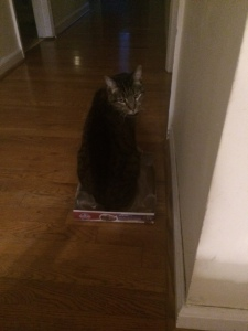"""Posing, hoping to partake in the """"cat in a box"""" internet phenomena."""
