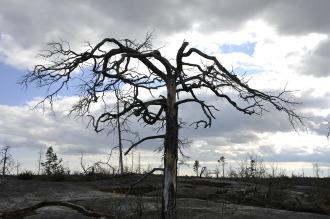 tree-138563_1280