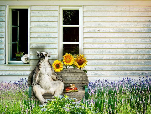 lemur-2861922__480