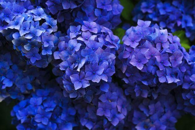bloom-1851481__480